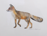 BIRGITTA SAFLUND ~ Fox I - watercolour - €300