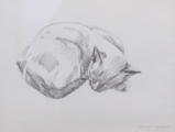 DAMARIS LYSAGHT ~ Cat Nap II - pencil - 42 x 35 cm - €160