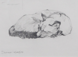 DAMARIS LYSAGHT ~ Cat Nap I - pencil - 25 x 29 cm - €110