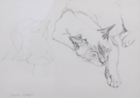 DAMARIS LYSAGHT ~ Cat Stretch - pencil - 35 x 41.5 cm - €160