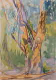 DAMARIS LYSAGHT ~ Eucalypt - gouache & pencil - 41 x 33 cm - €175