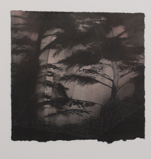LAURA WADE ~ Canopy V - ink on paper - 30 x 30  cm - €190